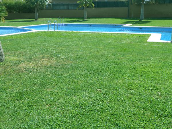 Jardiner a toni villena mantenimiento jardines y piscinas l eliana valencia - Mantenimiento piscinas valencia ...